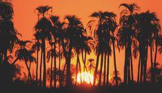 """Atardecer en una selva de Palmeras """"a la orange"""""""