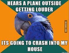 Paranoid Parrot Meme #parrotmemes