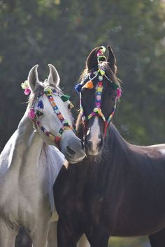 It might cost me hundreds of thousands of dollars, but I'm just putting it out there now, I really, seriously want one of these amazing horses.
