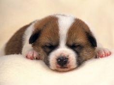 1594067, free desktop wallpaper downloads dog