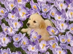Golden Retriever Puppy Among Purple Crocuses Puppies And Kitties, Lab Puppies, Cute Puppies, Pet Dogs, Cute Small Animals, Animals And Pets, Pretty Animals, Puppy Flowers, Poor Dog