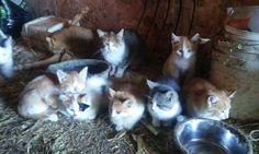 Sisters farm kittens