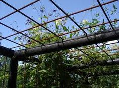 Pergola With Metal Roof Metal Pergola, Pergola Patio, Metal Roof, Garden Art, Garden Design, Recycled Garden, Green Architecture, Swimming Pools Backyard, Garden Structures