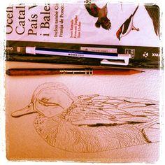 #dibujo a #lápiz #cerceta común #greenwingedteal #xarxet #anas #crecca #extension of #pencil & #eraser - @pacotorresill- #webstagram