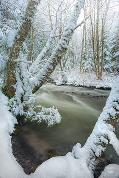 Gary Randall Photography   -    A freshly fallen snow on the Little Zigzag River near Mount Hood, Oregon.