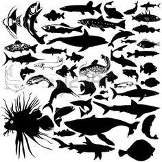 46 Stücke von detaillierten vectoral Fisch und Meer tierischen Silhouetten. Stockfoto - 4862680