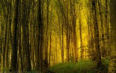 45 Forest Photographs with Magical Natural Light | Photography - 27 - Pelfind