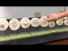 Mitosis Models - YouTube