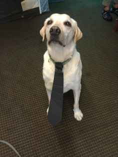 """""""But I got dressed and I need to open the zoo. I NEED TO OPEN THE ZOO."""" 