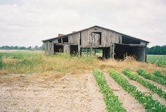 people of the mississippi delta | ... Clarksdale MS - Picture of Mississippi Delta, Greenville - TripAdvisor