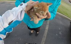 A motorcyclist stops traffic, leaves her bike and runs into a busy road to   save the life of a lost kitten in peril in America