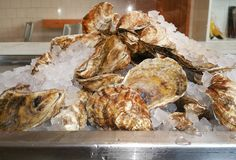 10 steps to shucking an oyster