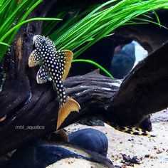 How To Get Started With Salt Water Fishing – Fanel Sport Tropical Freshwater Fish, Tropical Fish Aquarium, Freshwater Aquarium Fish, Reef Aquarium, Jellyfish Aquarium, Aquascaping, Pleco Fish, Fish Tank Themes, Plecostomus