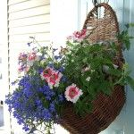 container gardening in a hanging basket