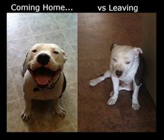Gemma pouts WORSE than this when we leave her!! Maggie does too!! There's nothing like a pittie smile when you come home though!   :)