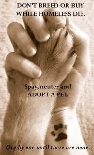 Don't breed or buy while homeless pets die. Spay, neuter, and adopt a pet.
