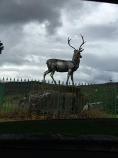 Clan stag