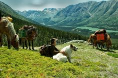 Discover the treasures of the Yukon landscape on horseback as you ride up majestic mountain ridges, across creeks and through peaceful valleys on this 10-day adventure with Sky High Wilderness Ranch!