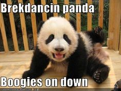 Google Image Result for http://stealth23t.files.wordpress.com/2009/09/funny-pictures-breakdancing-panda.jpg
