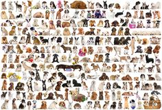 size: Stretched Canvas Print: World of Dogs : Using advanced technology, we print the image directly onto canvas, stretch it onto support bars, and finish it with hand-painted edges and a protective coating. Dog Poster, Cat Posters, 2000 Piece Puzzle, Poster Prints, Art Prints, Painting Edges, Stretched Canvas Prints, Original Image, Black Fabric