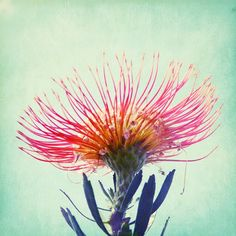 Garden by the sea - Fine Art Photography blog by Lupen Grainne: Bold colors botanical beauty - nature photography
