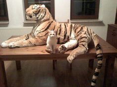 Disaster and tiger