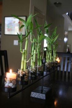 This clever homeowner uses a candelabra to hold both candles and lucky bamboo, with great results.