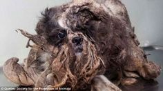 The Incredible Transformation of an Abandoned Dog | Orvis News