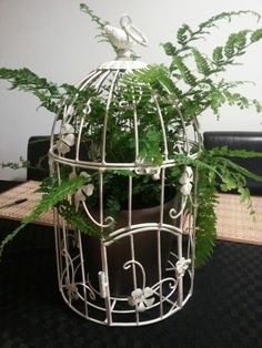 Beautiful birdcage with maiden hair and fern decorative