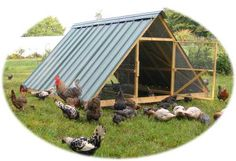 I love the idea of this pasture shelter for free ranging flocks. I can almost picture the goat herd and chickens inside in the shade!