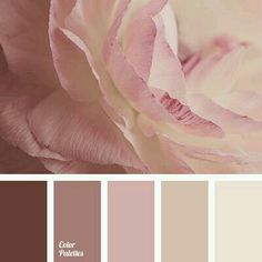 White and pink rose palette