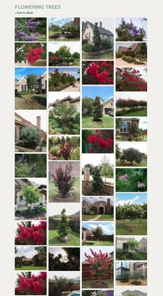 The Top Flowering Trees in Texas / Best Flowering trees/ Flowering Trees in North Texas / Treeland Nursery Trees And Shrubs, Flowering Trees, Trees To Plant, Tree Care, Growing Tree, Picture Design, Plant Care, Landscape Design, Texas