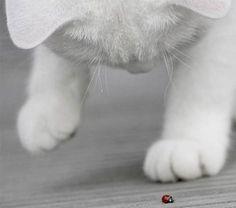 Ladybug and Kitty