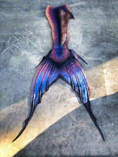I love these colors. This tail is beautiful.