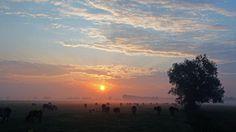 Dawn on the Farm - Pixdaus
