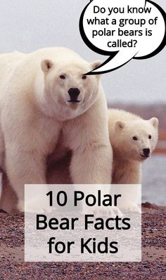 10 Polar Bear Facts for Kids Lindsay Moore's gentle and beautifully ill. Polar Bear Fun Facts, Bear Facts For Kids, Polar Bears For Kids, Polar Bear Fur, Animal Facts For Kids, Penguins And Polar Bears, Animals For Kids, Facts About Bears, Artic Animals