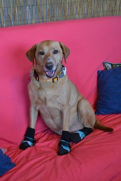 Coupon code for Snuggy Boots suspenders to hold on your dog's booties and protect your dog's paws from hot asphalt this summer!