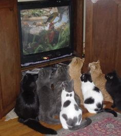 One its funny because all the cats are looking at a bird on the TV. Two its funny because some one has that many cats.
