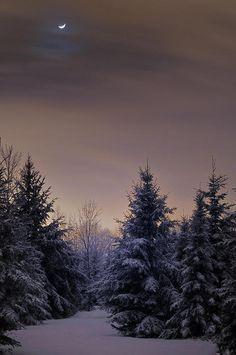 snowy + moon