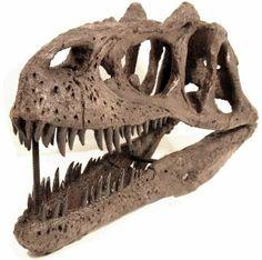 Allosaurus skull (reproduction)