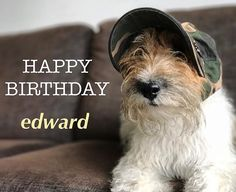 Happy 3rd birthday @edward.lear . I hope you have the best birthday ever pal, filled with everything you like. With love from GI Ginger ❤️ #edwardlearturns3 #hatpartyforedward #edwardturns3 #edwardshatparty #birthdayboy  #whft #dogsinhats #wirehairedfoxterrier #dogswithbeards #the👂🏻club #gingerdog #foxterrier