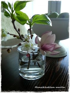 flowers, blommor, kukkia, iittala, details, detaljer, asetelma, magnolia