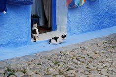 Morocco,Chefchaouen