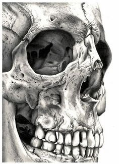 Incredibly detailed skull drawing/ Drawing by Lynsey Hayton.