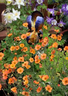 Specializing in rare and unusual annual and perennial plants, including cottage garden heirlooms and hard to find California native wildflowers. Cut Flowers, Wild Flowers, Colorful Flowers, Farm Images, Hummingbird Garden, Farmhouse Garden, Flower Farm, Farm Gardens, Clematis