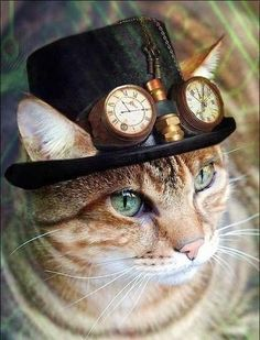 Steampunk Tendencies - Google+ I wonder if I could convince Perry that cool cats wear top hats.