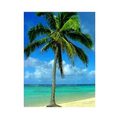 Palm Trees Pictures ❤ liked on Polyvore featuring backgrounds, palm tree, beach, tree and blue
