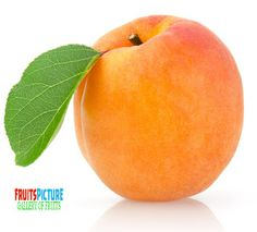 Name : Apricot  Binomial name : Prunus armeniaca Kingdom : Plantae ...