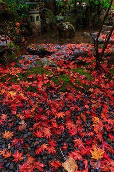 burnt red leaves strewn across the lawn Autumn Leaves Japan, Spiritual Photos, Zen Garden Design, Japan Destinations, Autumn Scenes, Moon Photography, Japanese Maple, Amazing Nature, Beautiful World