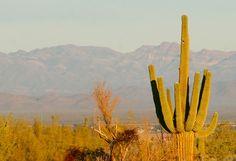 More beautiful Sonoran Desert.